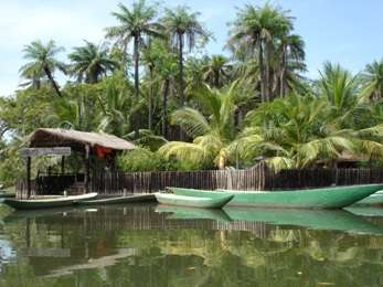 Eco park Makasutu culture forest in Gambia